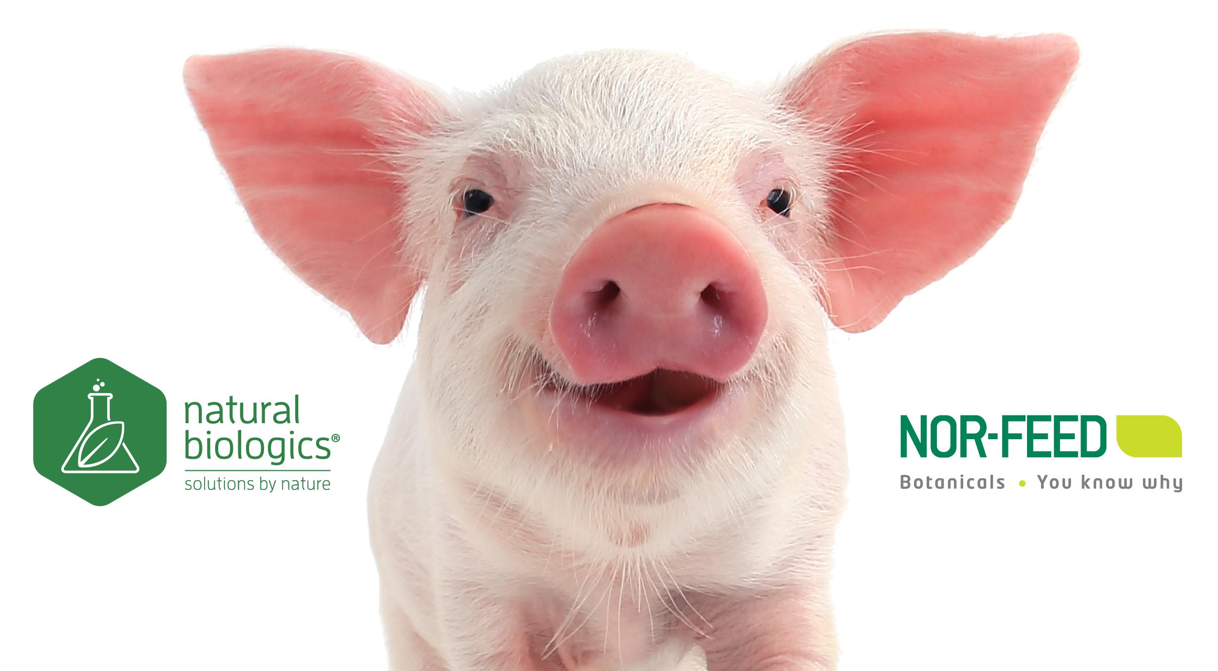 See Us At World Pork Expo