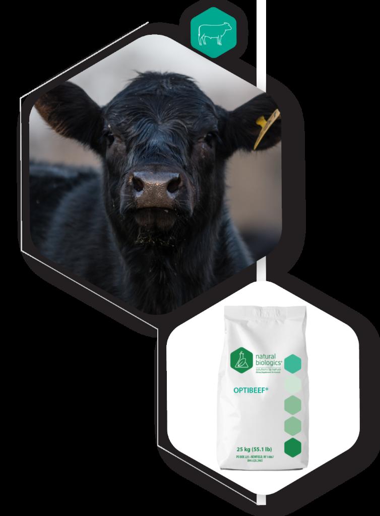 Optibeef Icons of cow and bag