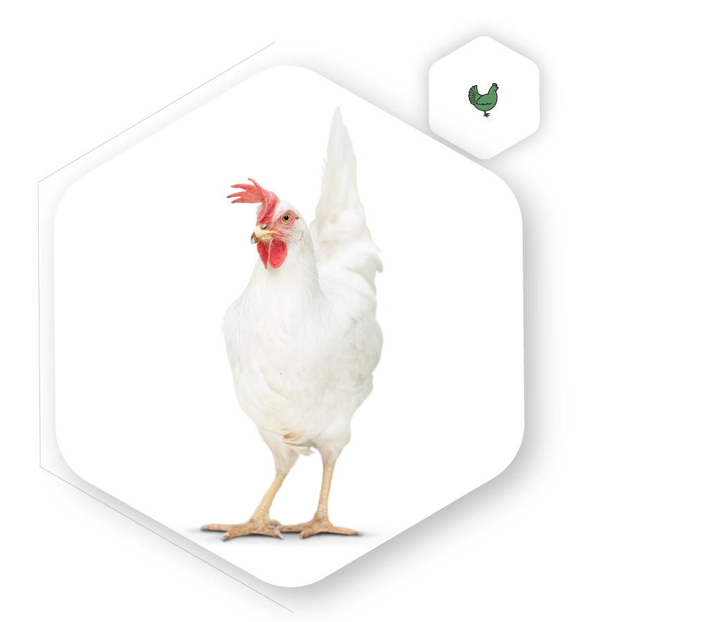 Poultry Icon