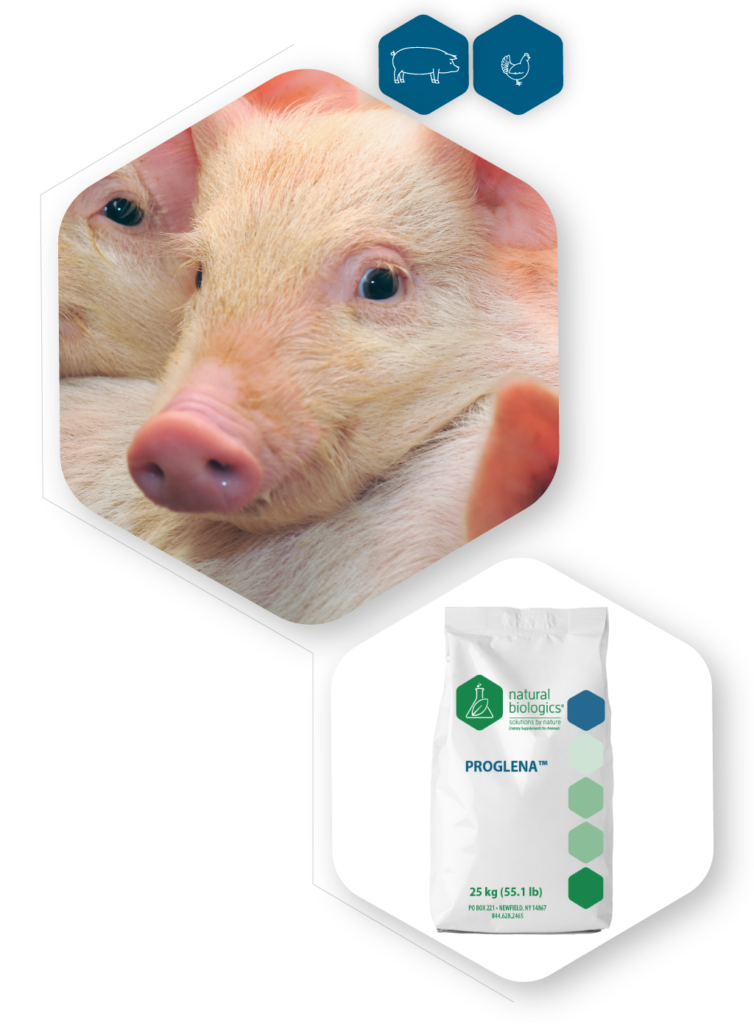 Proglena icon of pig and bag